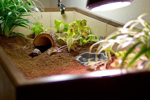 Trasformazione di un acquario in terrario for Acquario esterno per tartarughe
