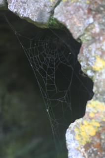 Attēls no Charles Fort pie Kinsale. mist corner ruins spiderweb kinsale dew charlesfort
