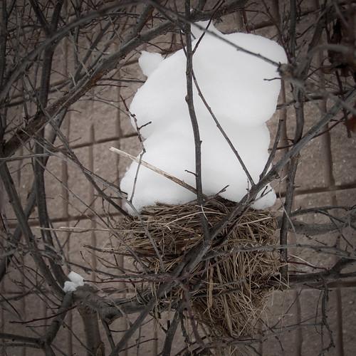 snow bird secondlook canalview