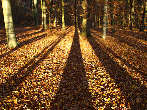 Big shadows in the autumn forest