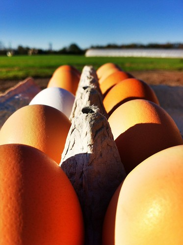 Certified Organic, Pasture Raised Chicken Eggs