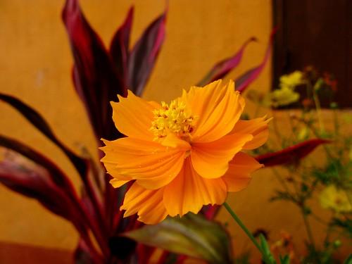 flower color nature focus