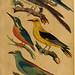 Handbuch für den Liebhaber der Stuben-, Haus- und aller der Zähmung werthen Vögel