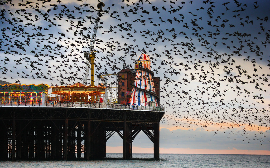 Starlings over Brighton Pier - BEST VIEWED LARGE