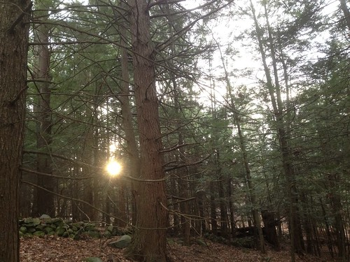 The sun brings another day of light to this old growth forest