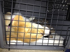dog crate(1.0), cage(1.0), pet(1.0), animal shelter(1.0),