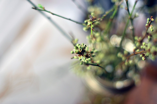 flower-buds-in-jar