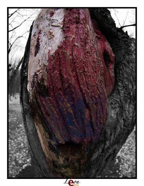 Le peuple de la forêt - Page 3 7001088237_ec52266d2f_z