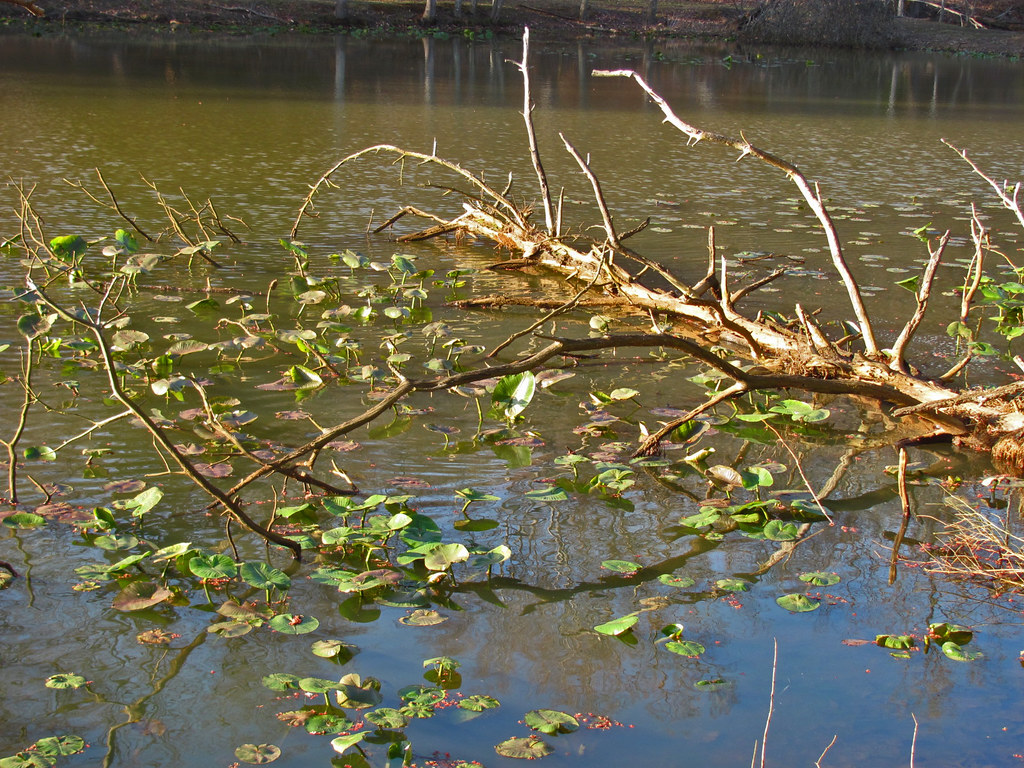 Pickerel Habitat