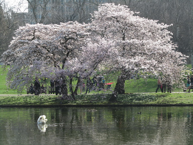 Spring in St James's Park