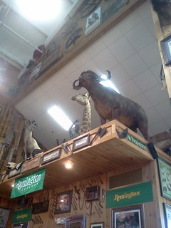Giraffe at Smoky Mountain Knife Works