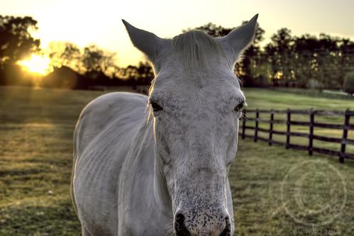 horse canon20d hdr whitehorse unioncounty photomatix horsesunset whitehorsesunset unioncountynorthcarolina unioncountync topazdenoise brycehoover 3clixpix
