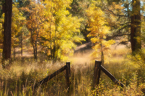 california autumn trees nature forest fence landscape bigbearlake