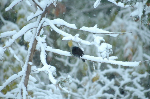 Autumn Snow Bird by Jai Agnish