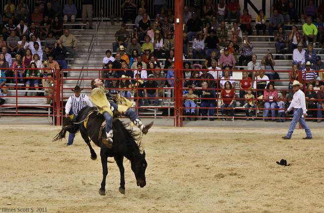 2011 11 03 60d Davie Fl Rodeo Night 085 Flickr Photo