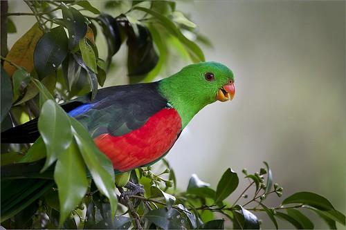 Smiling parrot