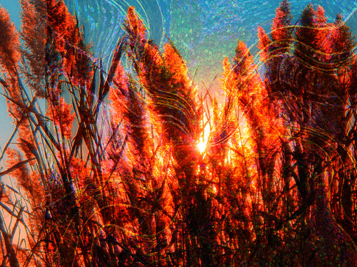 sunset fall autumn november late day reed marsh photoshop flickr nature google yahoo stumbleupon facebook newburyport ma getty massachusetts new hampshire america earth color montage manipulation improved for sale interesting creative surreal avant guarde image