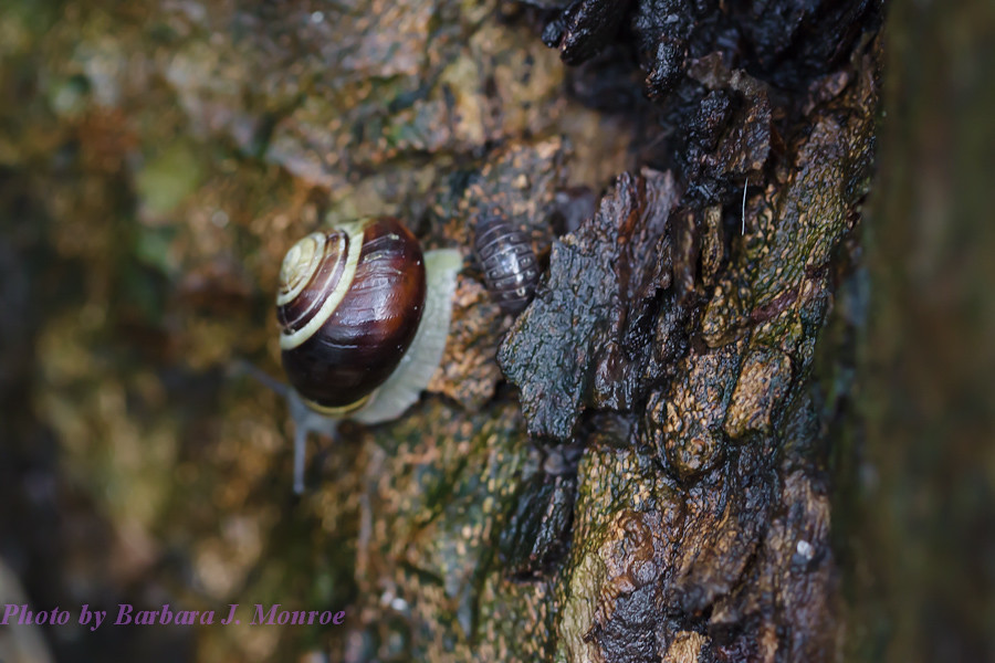 Snails (6 of 6)
