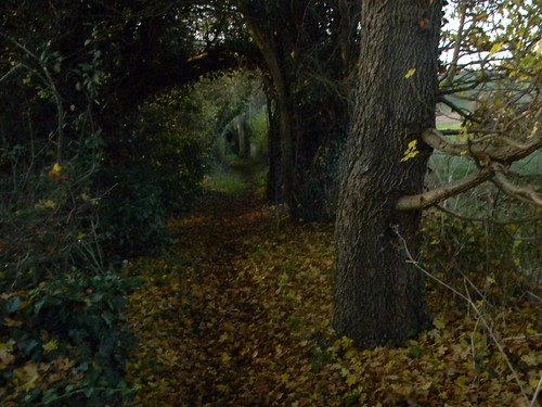 Gloomy bridleway