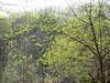 germogli verdi e lucenti