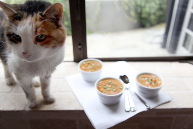 Silly Cat, Soup is for People
