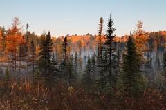 Algonquin Moose Hunt