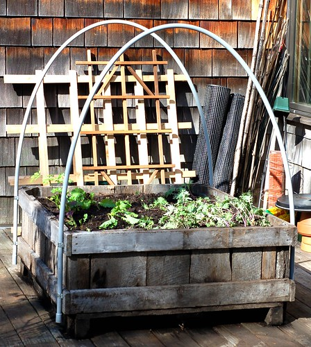 Mini hoop house on our back deck by Eve Fox, Garden of Eating blog, copyright 2011
