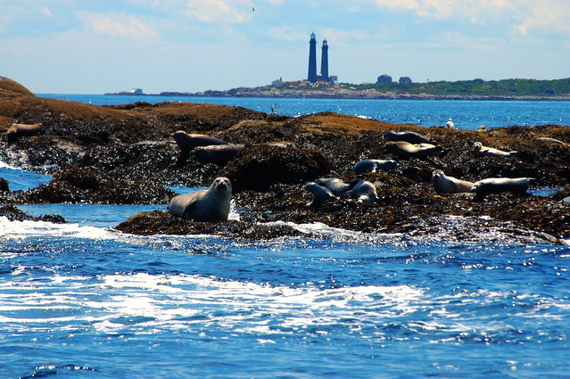Seals sunning on Little Salvages with Twin Lights in background