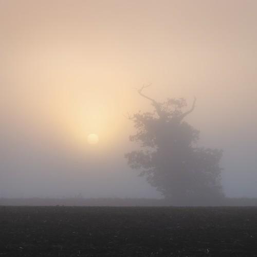 uk mist fog sunrise dawn gloucestershire elmore paulwheeler afszoomnikkor2470mmf28ged paulsimonwheeler