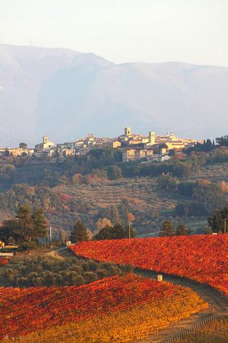 Montefalco, terra di Sagrantino by chiccofratta