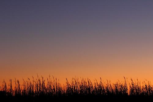 sunset sky plants color silhouette canon prime 85mm fave gradation 60d