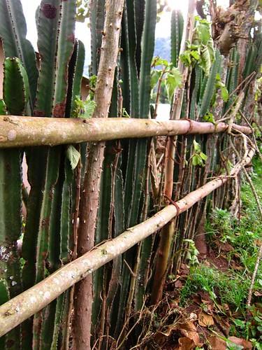 cactus fence uganda