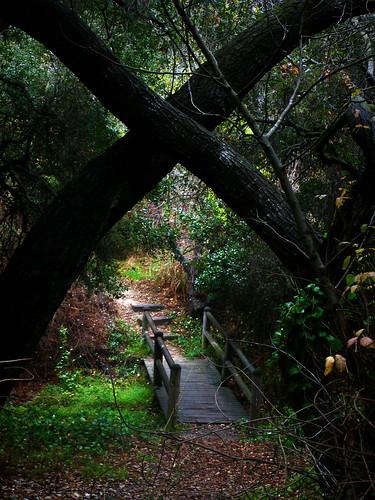 kiss at the little wood bridge.