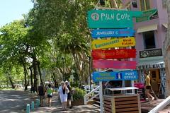 Palm Cove_3