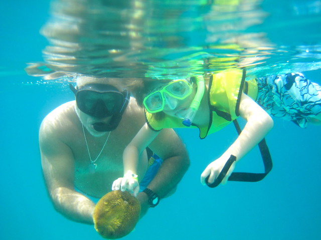 snorkeling tour in the caribbean family adventure