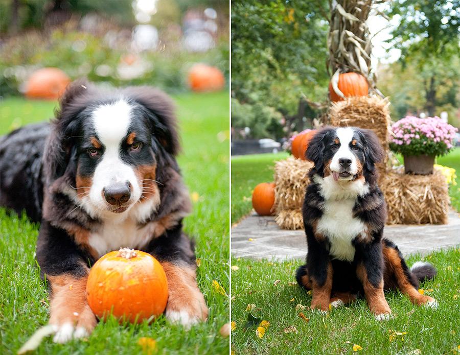 Jeff_pumpkin-2