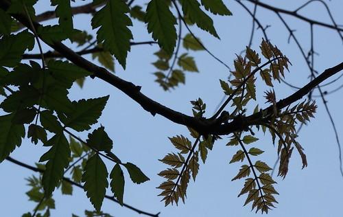 Pollen_2012_16