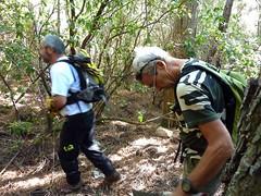 Trace pour rejoindre la pointe du Castellucciu : les outils de maquis en action