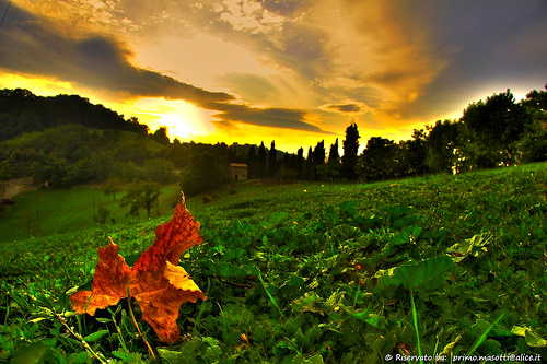 autumn trees sunset sky italy tree verde green alberi landscape tramonto natura cielo luci foglia modena albero autunno montagna paesaggio emiliaromagna zocca appenninomodenese zocchetta masottiprimo