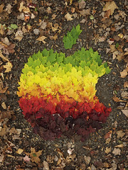 Apple Logo Autumn Spectrum 08/10/11