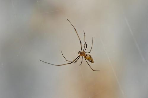 brown macro closeup spider web spin small tiny arachnida ayeayeisland