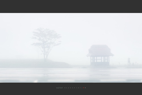 路边的雾 / the road in the fog
