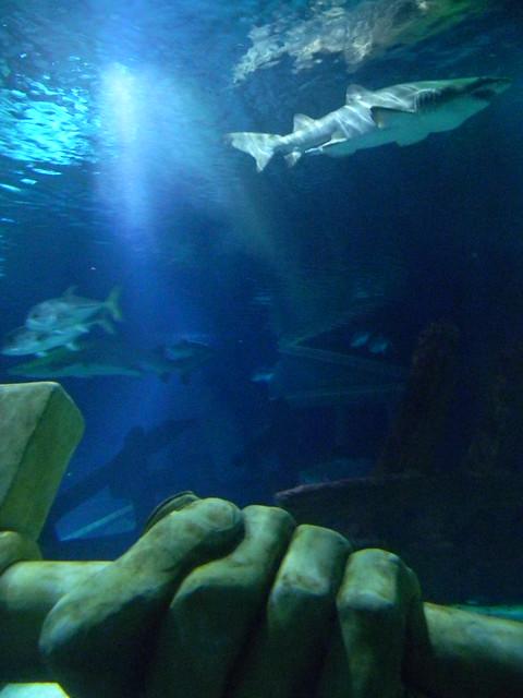 A Sand Tiger Shark Prowling The Sea Life Aquarium At The