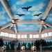 雙鯉濕地自然中心-冬候鳥鸕鶿模型