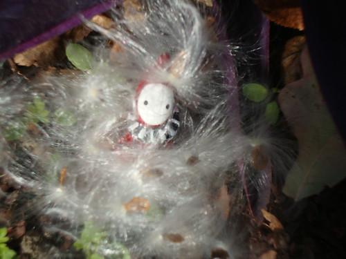 poppet in milkweed fluff