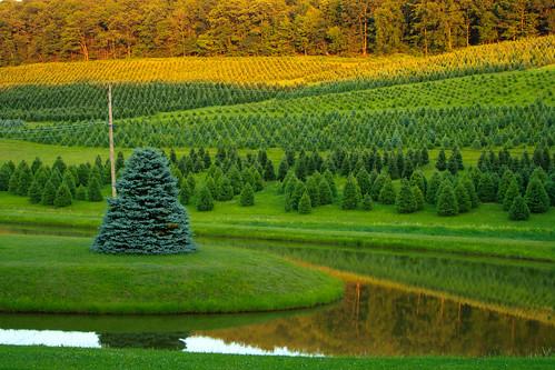 landscape pennsylvania treefarm lehighton towamensing oldhomesteadtreefarm