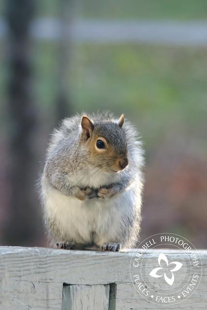 Sneeky Squirrel 11-12-11