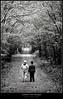 Camino del bosque by Daniel.Candal