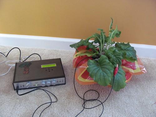 la la la la la - Music of the Plants