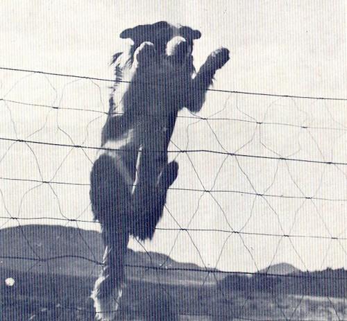 Panorama, nº8, Junho 1975 - 36a